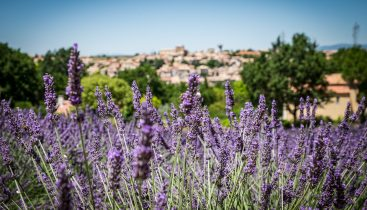 Visit Provence cobblestone village of Luberon with Provence Explorer