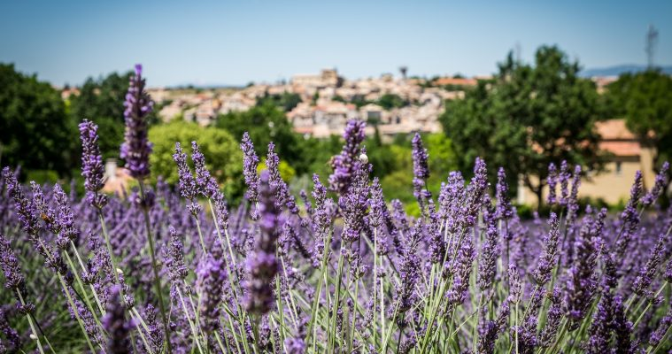 Full day tour all Provence in one day
