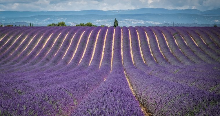 Full day lavender tour Valensole, Moustiers, Verdon and Occitane