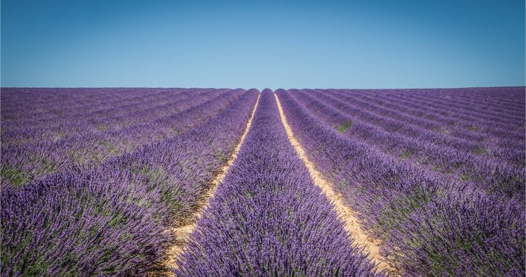 Full day lavender tour Sault and Luberon