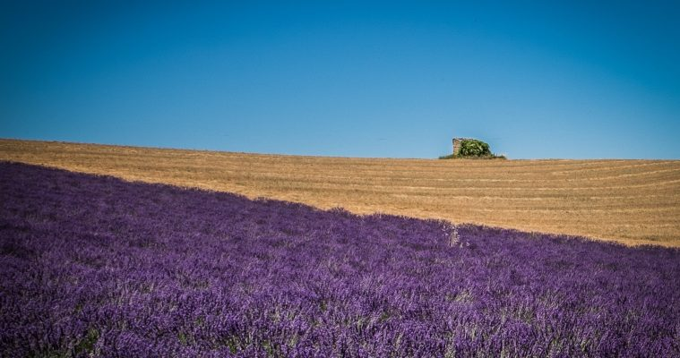 Full day lavender tour Valensole, Moustiers, Verdon and Occitane museum